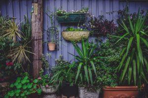 juist planten kiezen verticale tuin