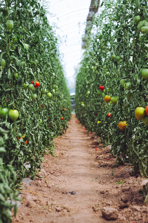urban farm beginnen