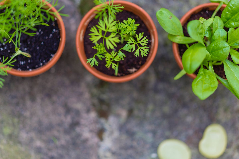 thuis kruiden verbouwen