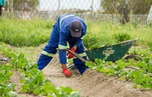 stadslandbouw in ontwikkelingslanden